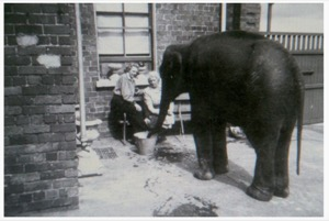 Ella Ziegler - ELEPHANT IN THE GARDEN